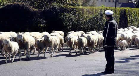 sheep_lawnmowers